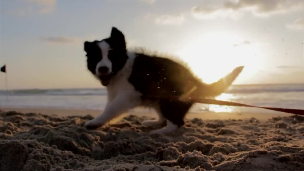 Puppy dog playful beach sand