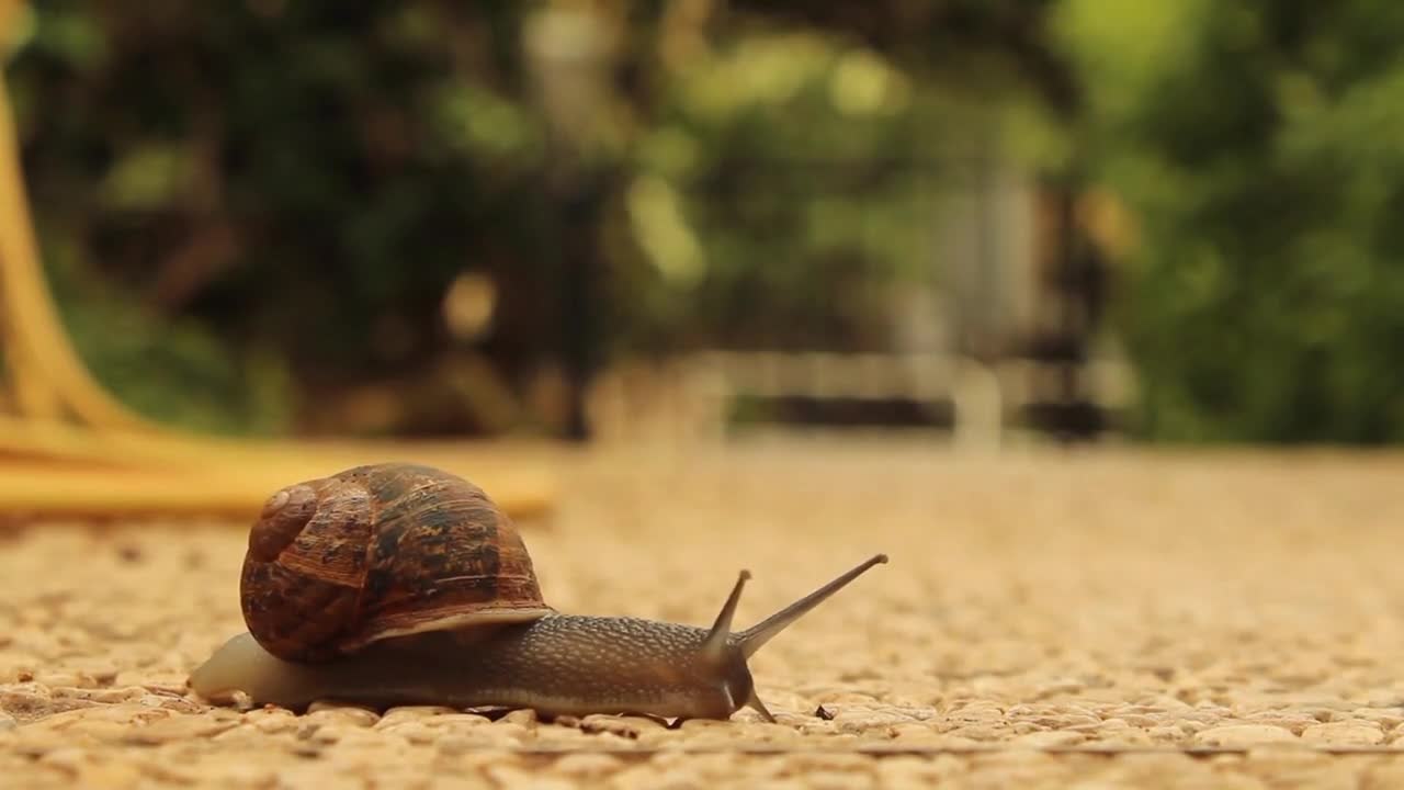 Snail slow crossing animal crawler