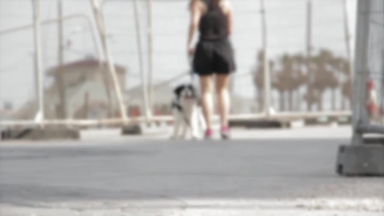 Walking the dog border collie dog pet animal
