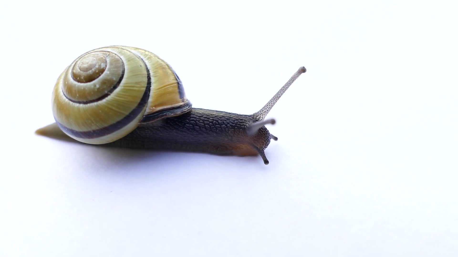 Snail mollusk shell slow nature