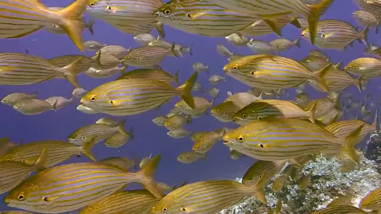 Diving scuba diving underwater fish ocean