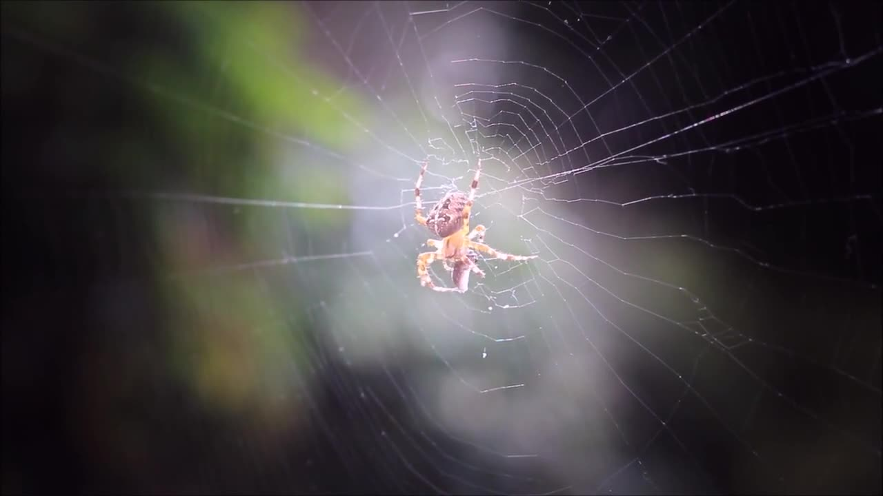 Spider cobweb network prey close