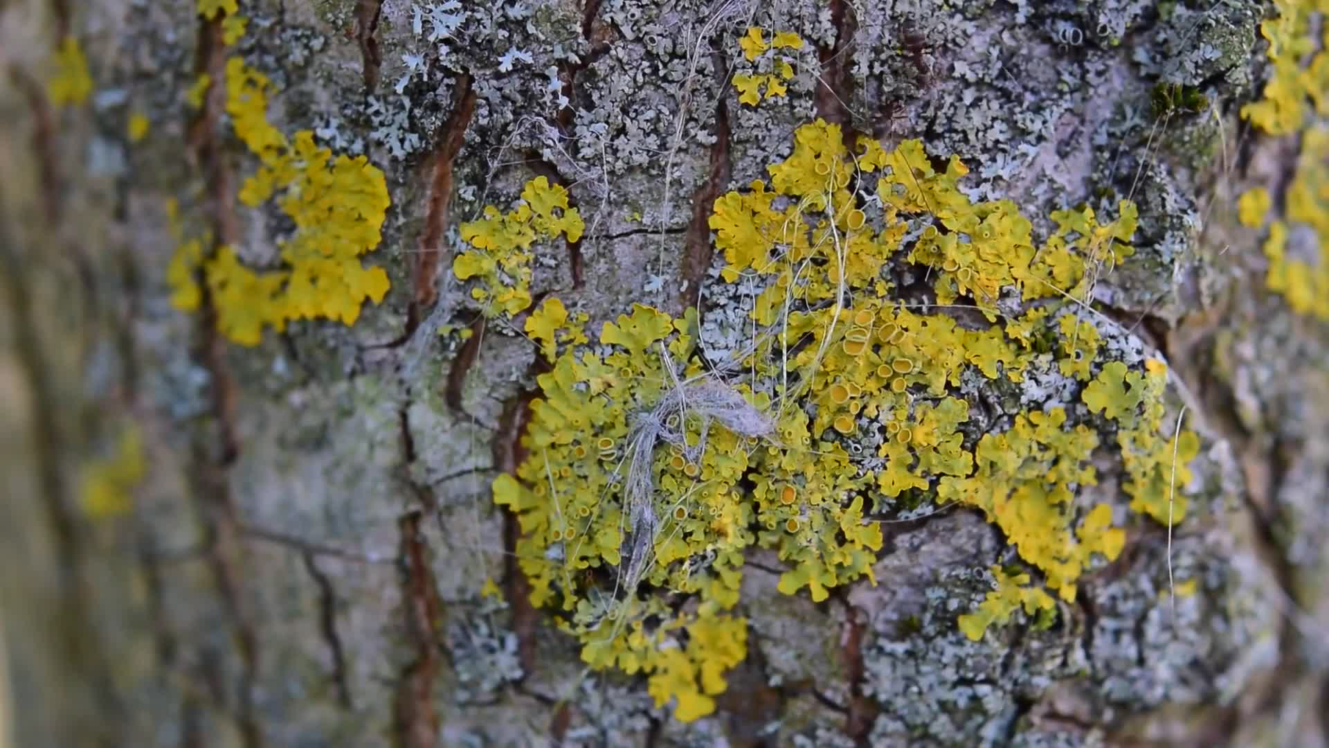 Ants tree bark nature insect
