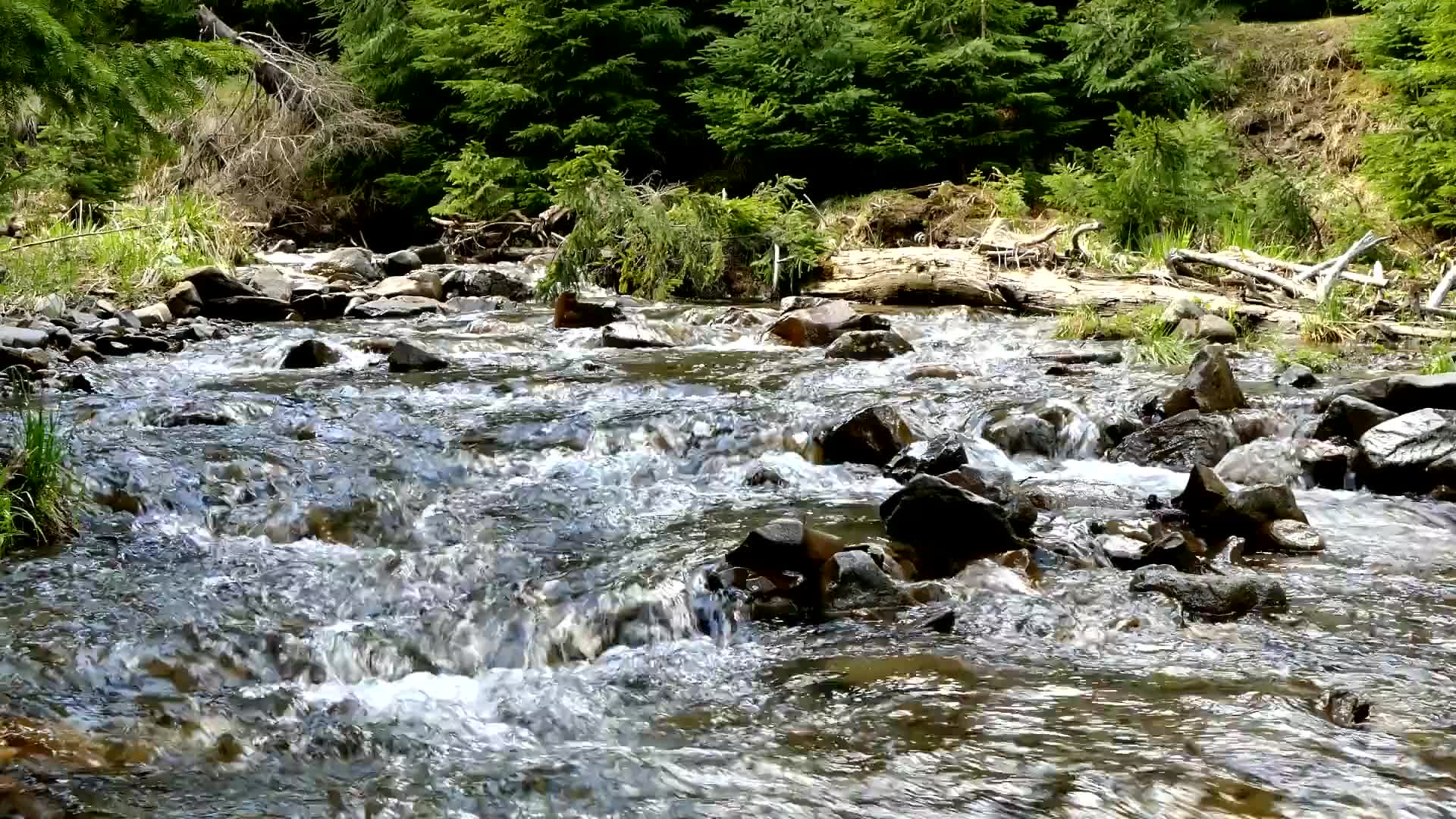 The sound of the creek river mountain river nature