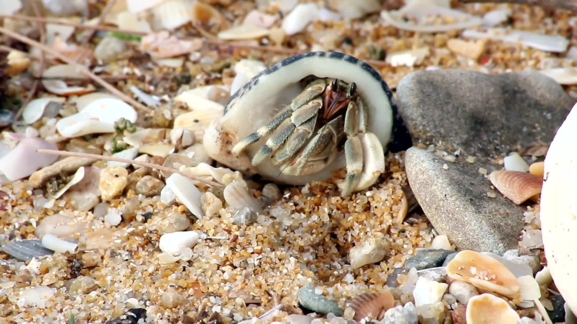 Crab beach animal shell legs