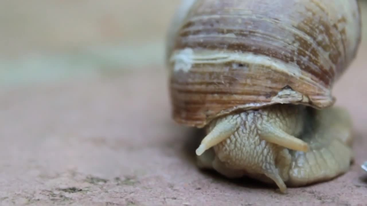 Snail shell crawl nature gastropod