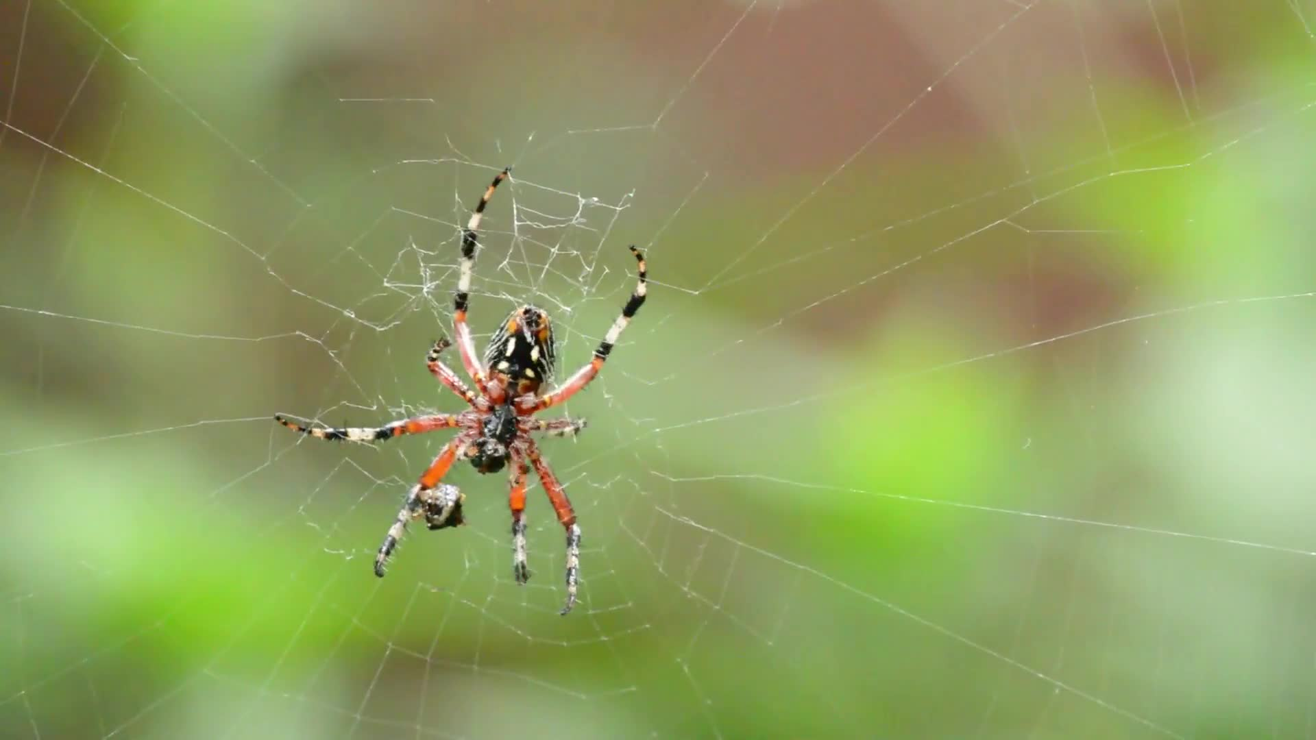 Spider arachnid food eating network