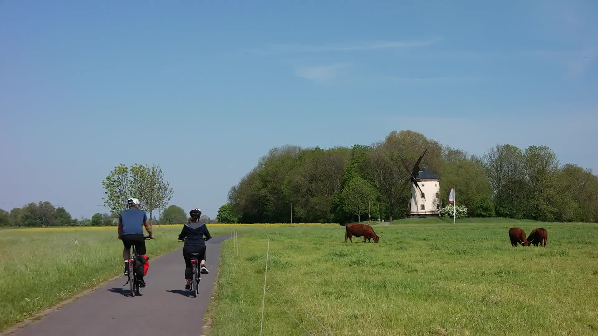 Cyclists windmill cows dresden cycle path