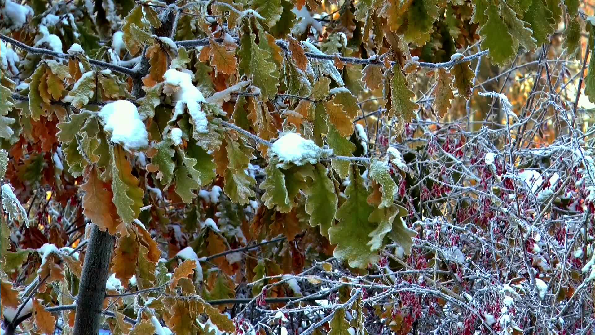 Winter snow leaves berry nature