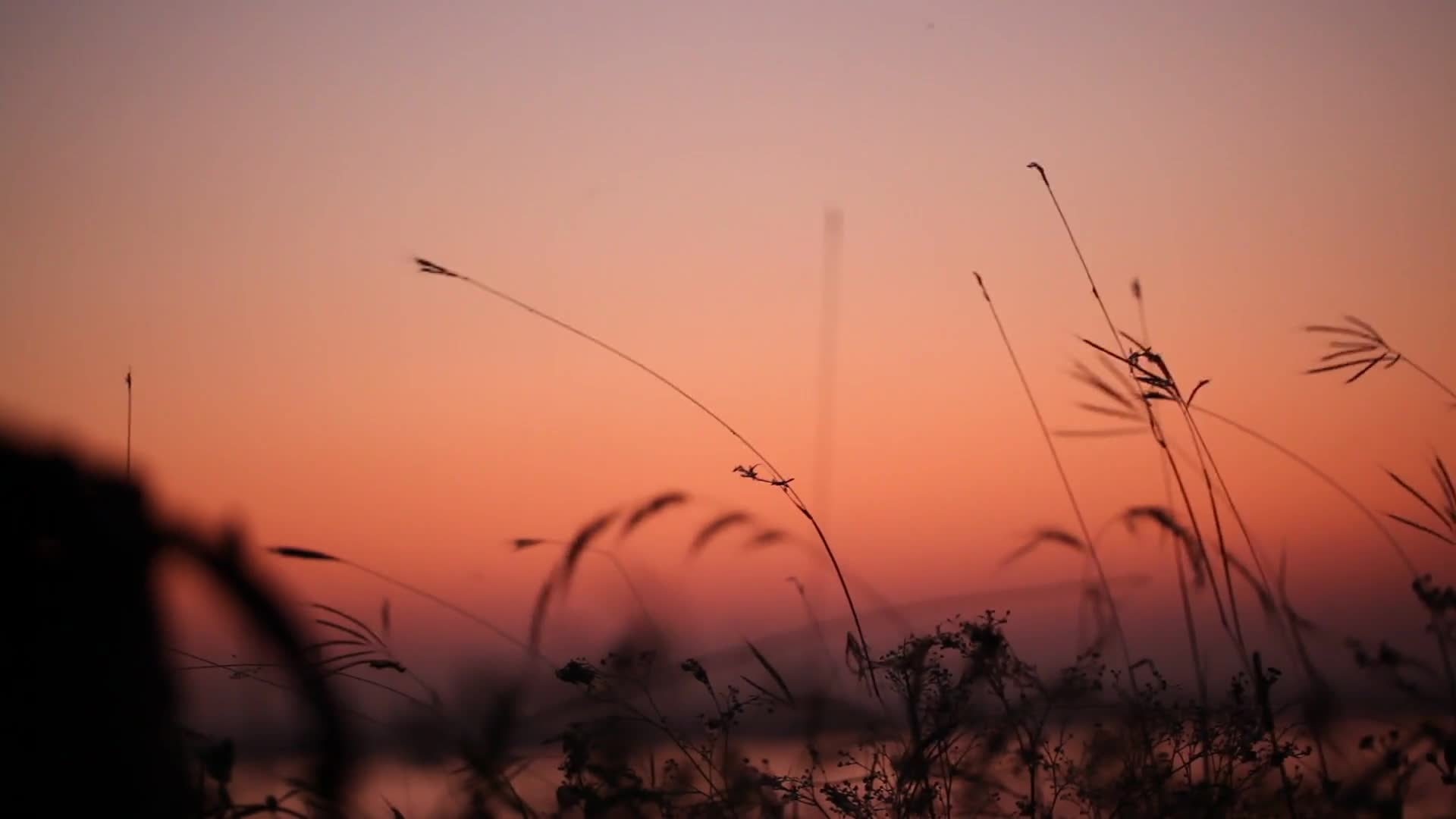 Evening grasses lakeside sunset nature